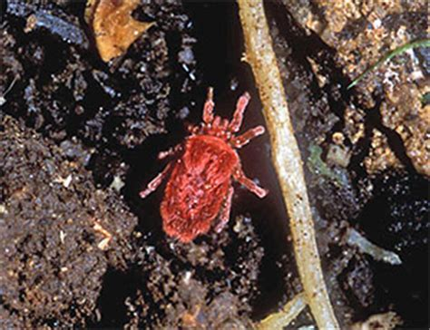 Soil Bugs - An illustrated guide to New Zealand soil