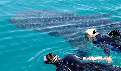 Swim with Whale Sharks and visit Ancient Ruins | Journey