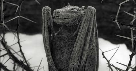 This Deadly Lake in Africa Turns Animals to Calcified