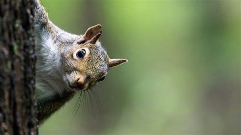 Iowa squirrel hunter accidentally shoots own brother on